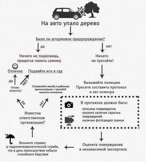 na-vash-avtomobil-upalo-derevo-05