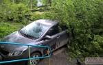 На ваш автомобиль упало дерево – что предпринять